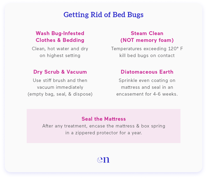 how to remove bed bugs