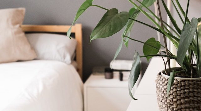 Talalay vs. Dunlop Latex Foam Mattress: What's The Difference?